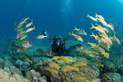 photographe underwater photo sous-marine noumea Nouvelle-Caledonie
