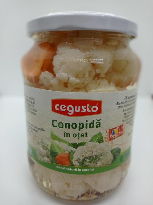 Cegusto Conopida in otet 0,700 gr