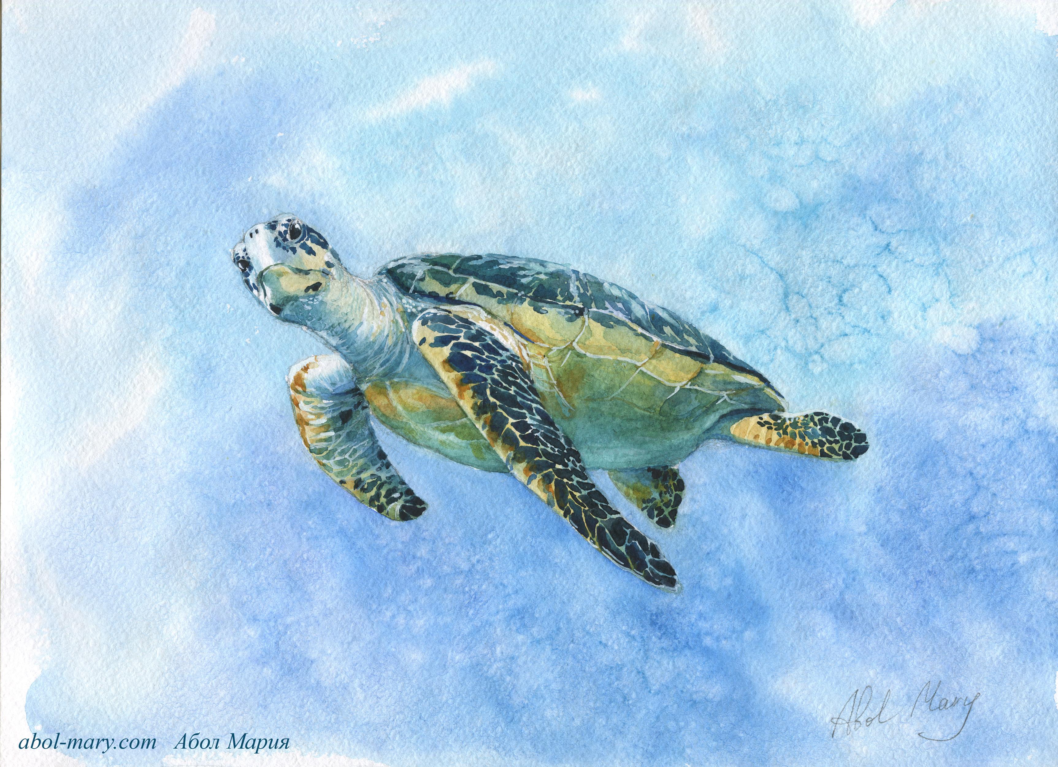 Иллюстрация Морская черепаха