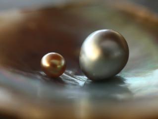 Perles de La Mer de Cortéz: Un savoir-fare spécifique