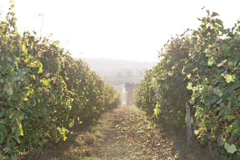 Une allée dans le vignoble