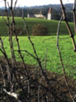 Domaine de Laxé-vignes