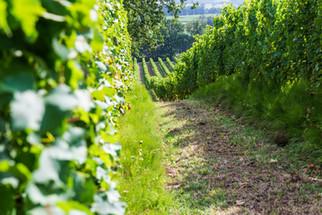 Allées des vignes