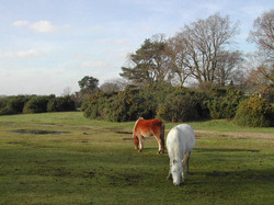 Ponies at Abbots Well