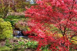 Exbury Gardens_Lucy Haydon