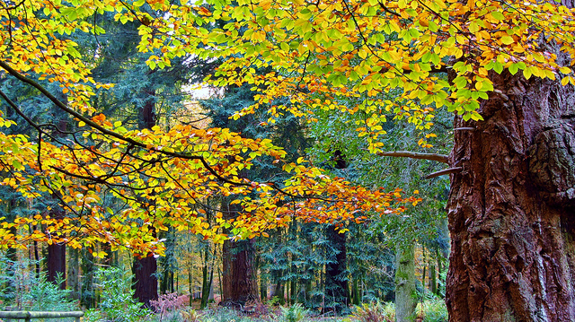 Blackwater Arboretum_Roman Hobler