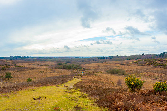 Picket Hill, Ringwood_Jack Pease Photography