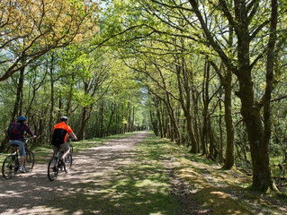 Cycling for Gold in the New Forest