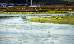Egret at Yarmouth_Andrew Gustar