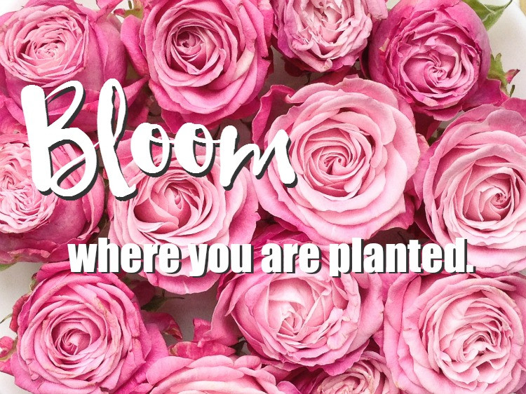 Be Yourself- Bloom where you are planted - Branding tips for female entrepreneurs Orange County Business Coaching by Savvy Girl PR
