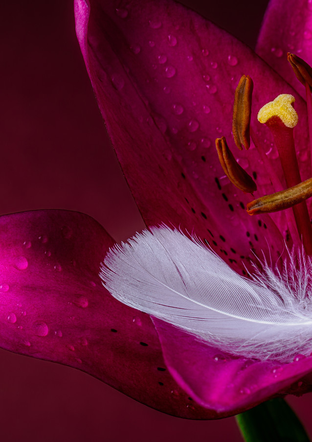 Daylily with Feather