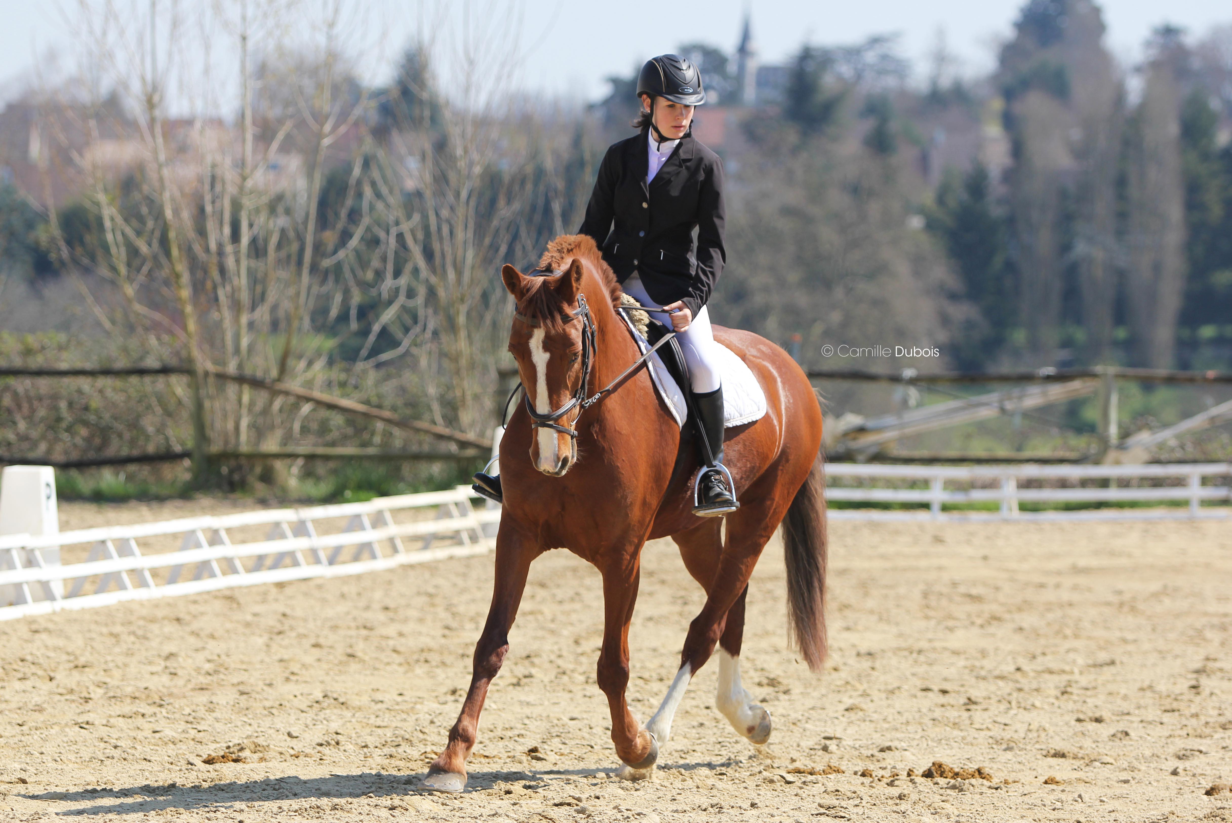 Equitation compétition 37