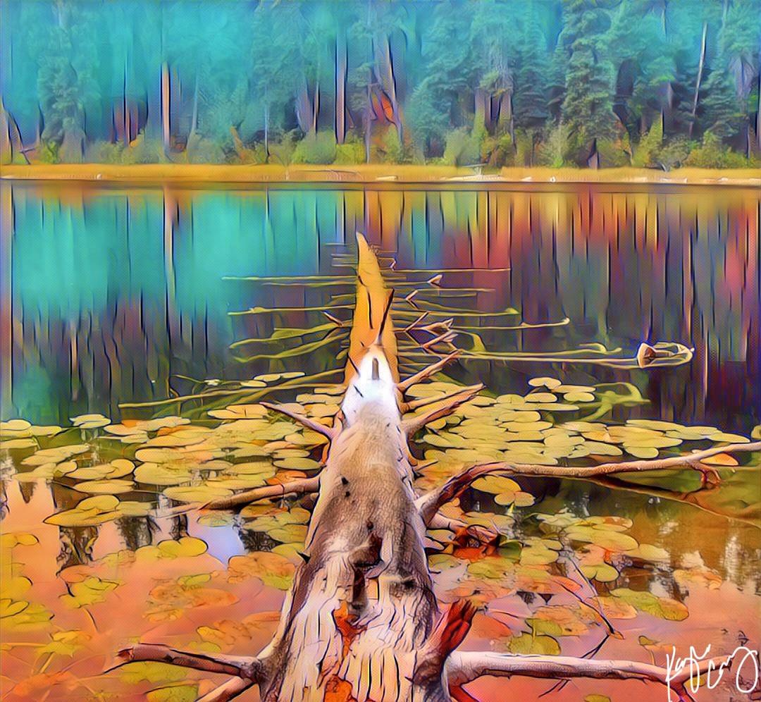 Fallen tree art 1