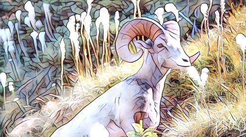 Glacier goat art 1