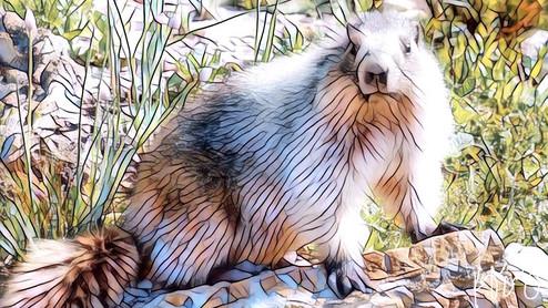 Glacier marmot art 1