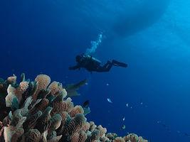 Marsa Alam Divers