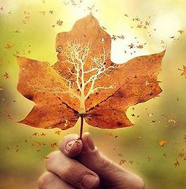 fly_away_leaves_leaf_autumn_wallpaper.jpg