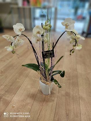 Phalaenopsis 80cm de 3 varas con cerámica..