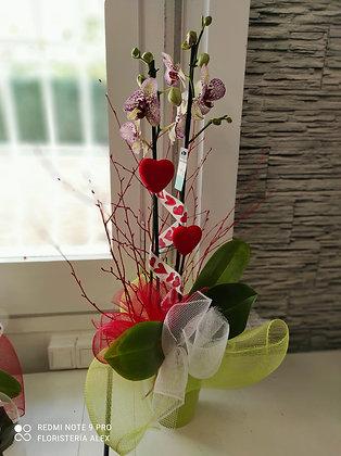 Phalaenopsis San Valentín, cerámica