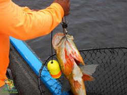Jan 15th, 2016 Peacock Bass Fishing