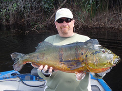 Peacock Bass Fishing with Capt