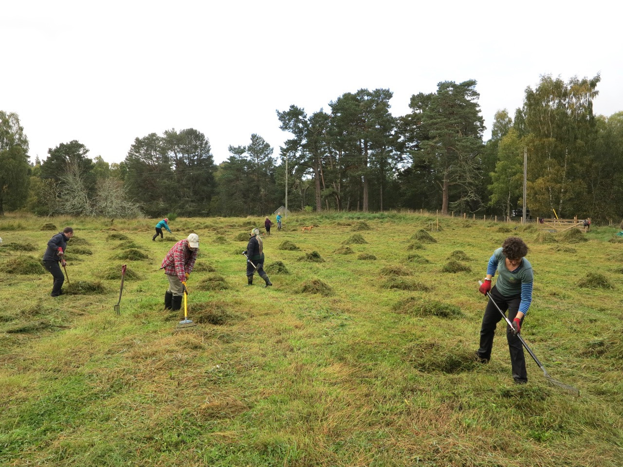 SFW and CNP volunteers gathering autumn cuttings from a perennial meadow