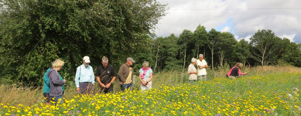 Summer visit to field of corn annuals and bird seed