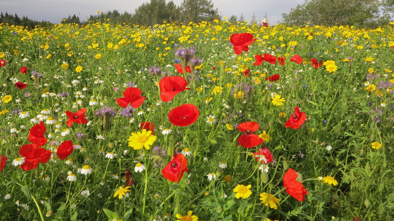 Wildlife field near Forres courtesy of Lindsay Gale