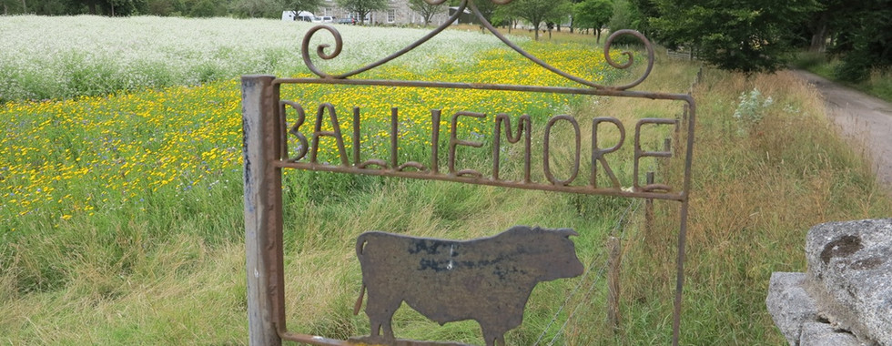 Flowers and bird seed crops at Balliemore, Nethybridge, 10th August