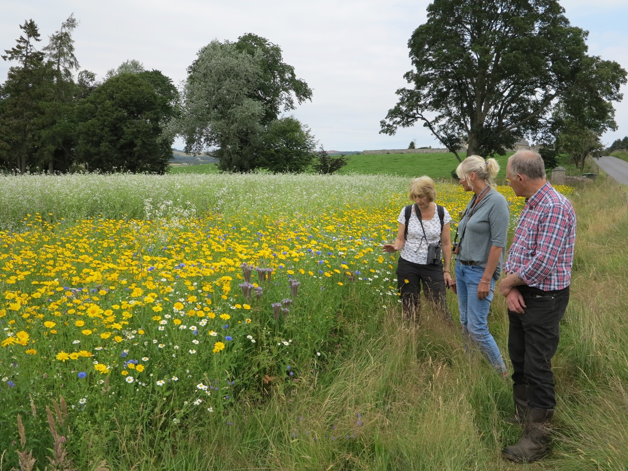 Aileen, Lindsay and John discuss the corn annuals at Balliemore