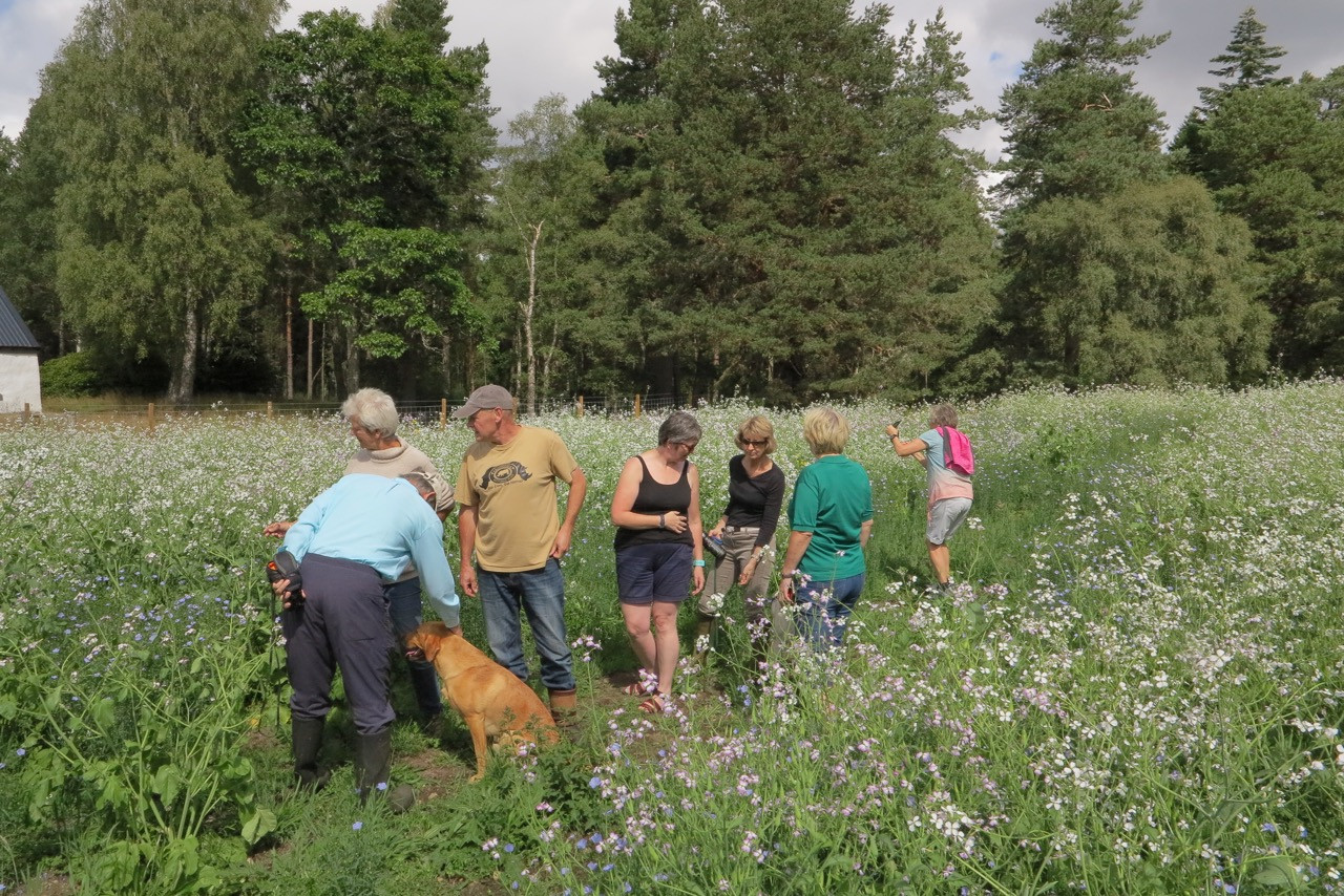 Summer visit to field with radish and wildflowers