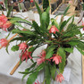 TGHS Flower Shows