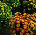 TGHS Plant Sales