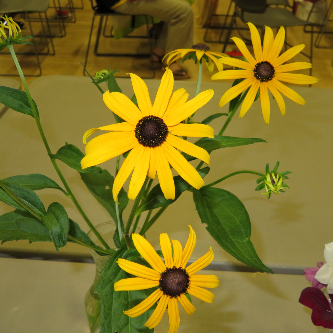 TGHS Flower Shows