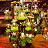 Light Bulb Succelent Garden