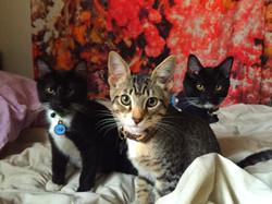 Alvin, Simon, & Theodore