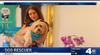 Hilarey Benda NBC LA Life Connected Senior Dog Rescue