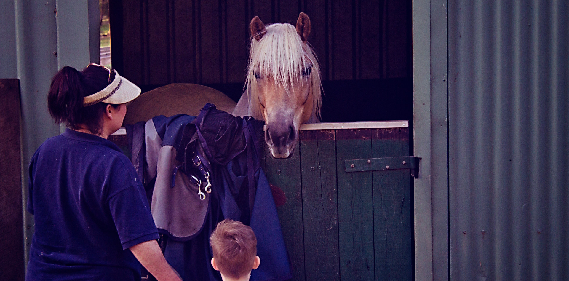 Meeting the Horses with Cathy!