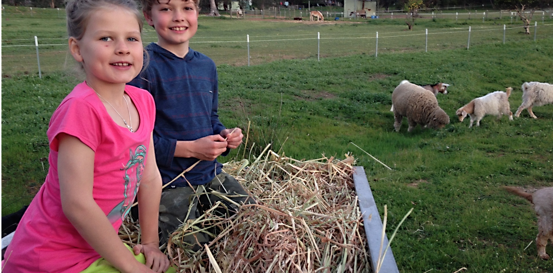 Free Hay rides every morning!