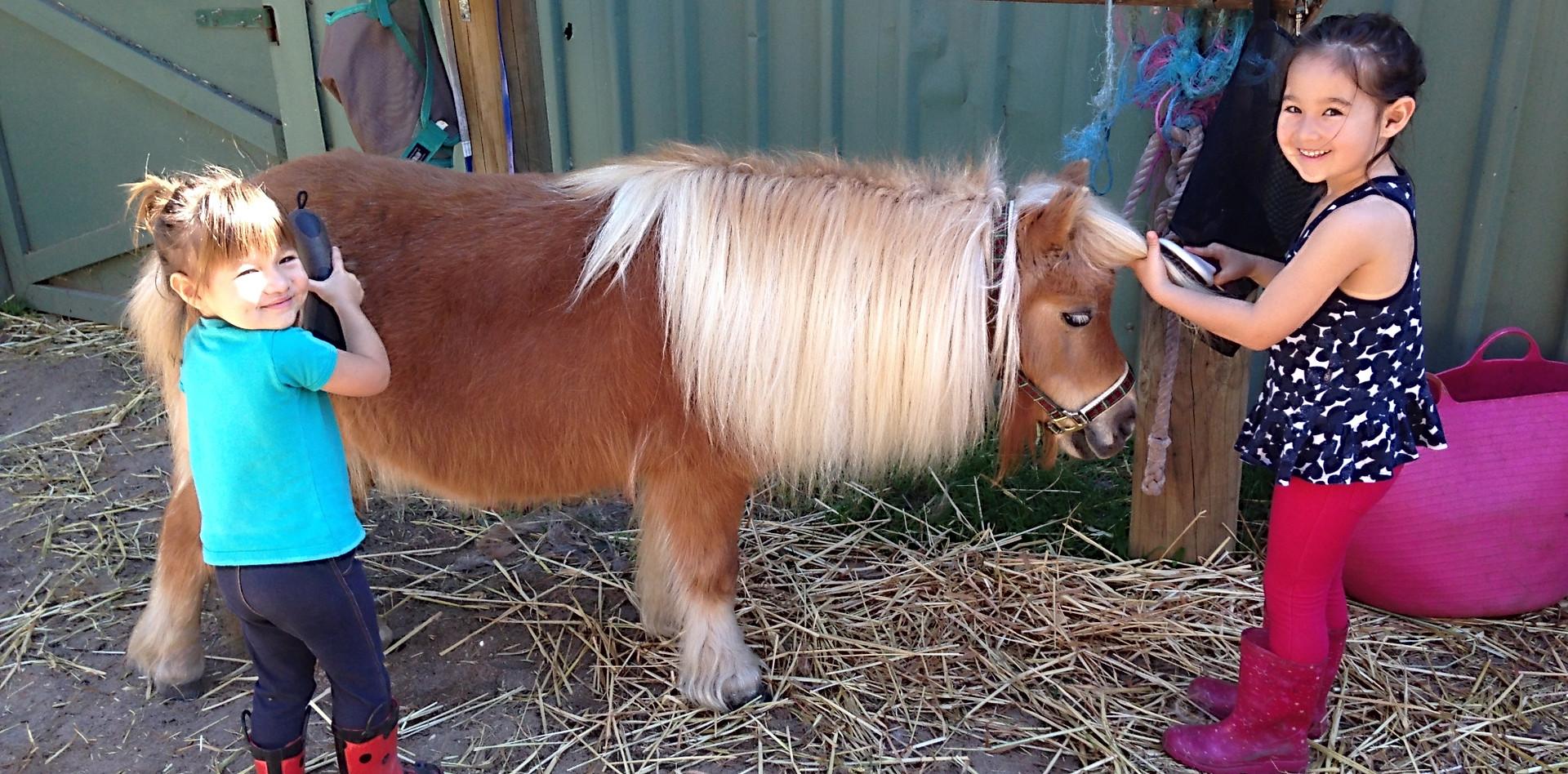 Pony grooming is always fun!