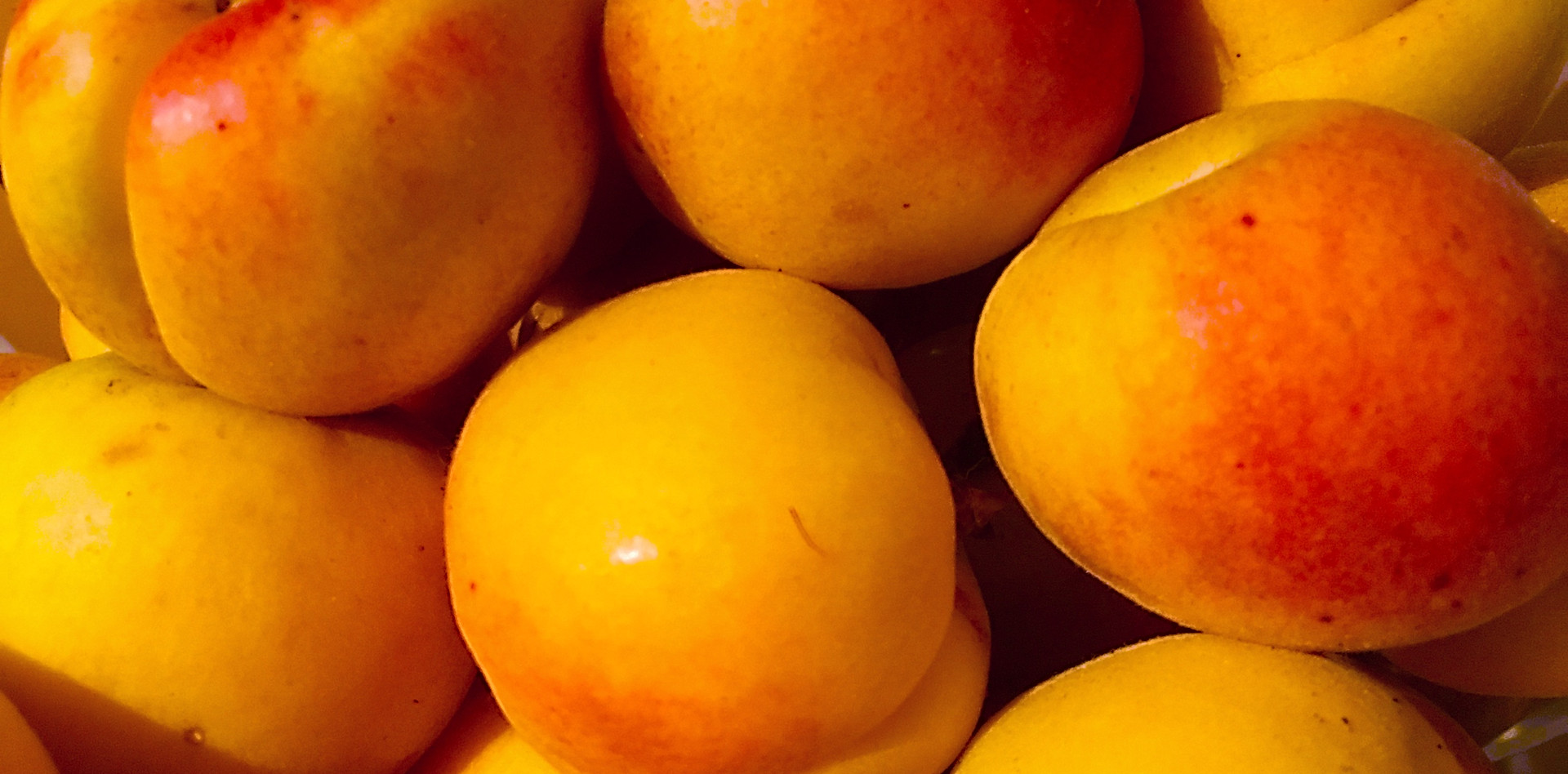 Fresh Apricots off the tree when in season!