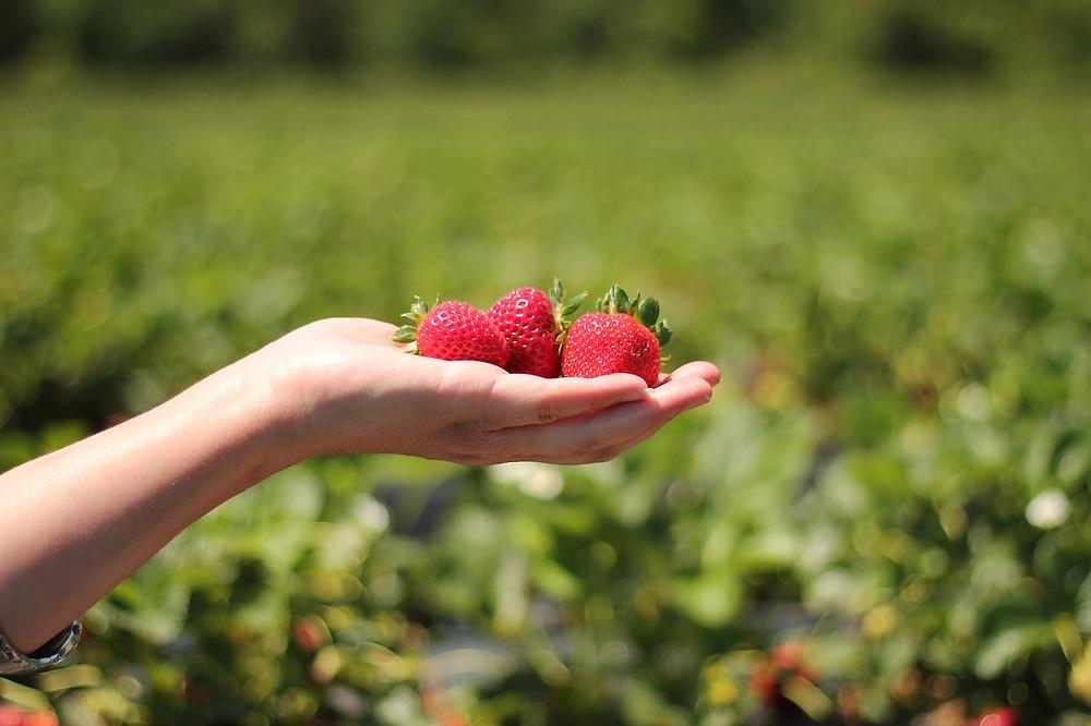 strawberries-484272_1280.jpg