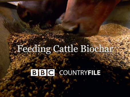 Feeding Cattle Biochar on BBC Countryfile