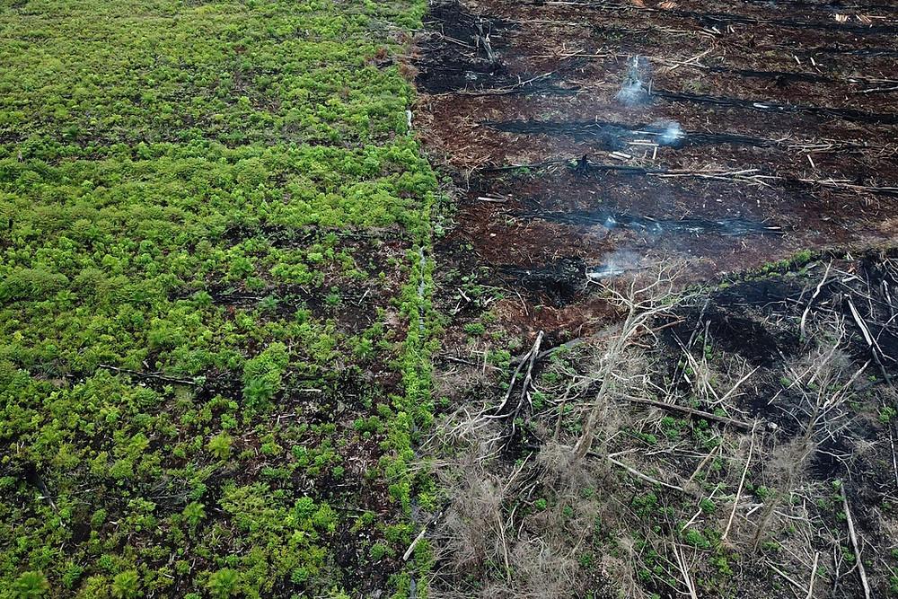 Deforestation of the Brazilian rain forest