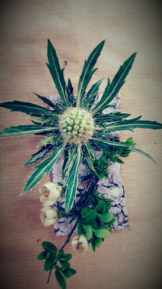 Buttonhole, Tree bark and Eryngium