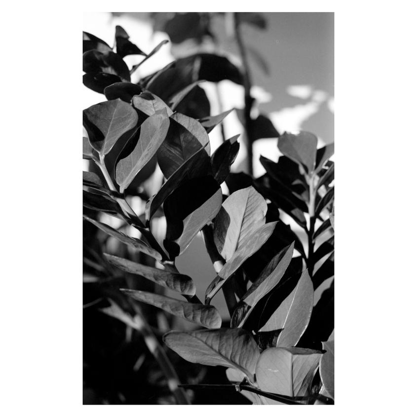 radost_1.png