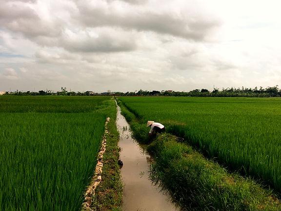 Vietnam Instagram Spots risaie
