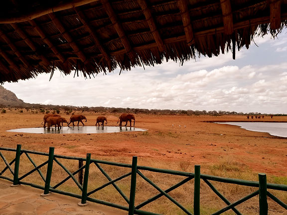 Kenya Instagram Pics Lodge pozza elefanti