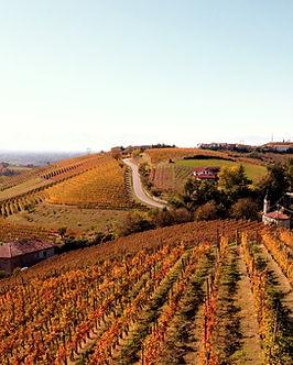 Piemonte Langhe vigneti