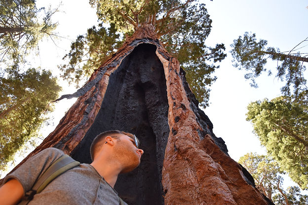California Sequoia national park